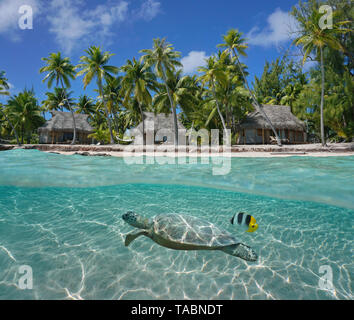 Bungalows and coconut trees on tropical coast with a turtle underwater, Tikehau atoll, Tuamotu, French Polynesia, Pacific ocean over and under water