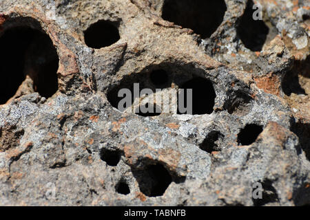 Natural Porous Lichen Covered Rock With Cavities - Stock Photo