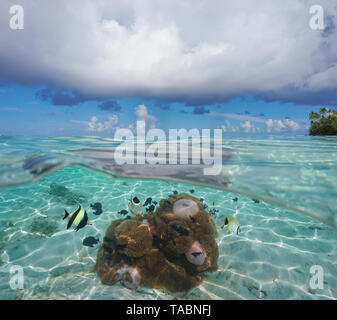 Seascape cloudy blue sky horizon with sea anemones and tropical fish underwater, French Polynesia, Pacific ocean, split view over and under water