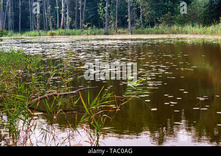 dead trees in the swamp, wild picturesque wetland - Stock Photo