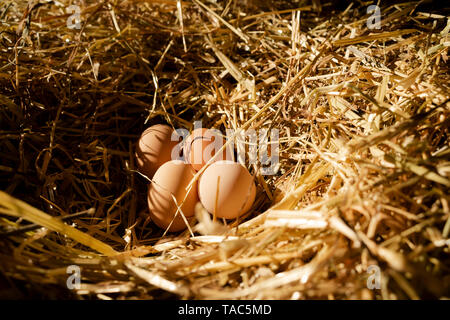 Four brown hen's eggs in a nest inside chicken house - Stock Photo