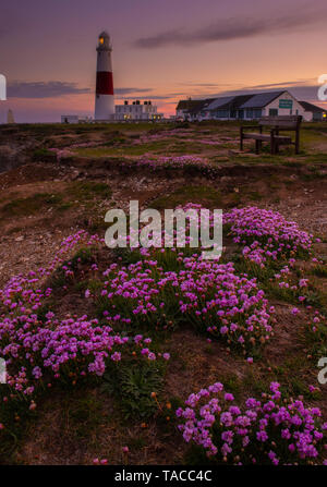 Portland, Dorset, UK. 23rd May 2019. UK Weather: The sun sets behind the iconic Portland Bill lighthouse on the Isle of Portland at the end of a beautiful spring day.  The delicate pink sea thrift flowers are in full bloom making the lighthouse particularly picturesque at this time of year.  Credit: Celia McMahon/Alamy Live News. - Stock Photo
