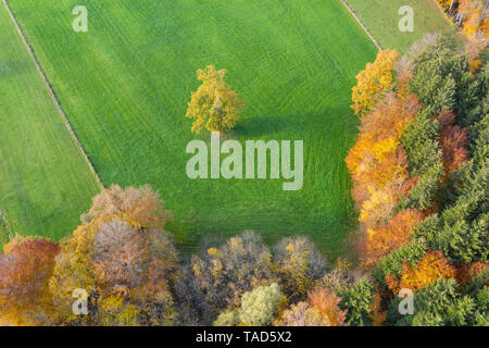 Germany, Bavaria, autumnal forest edge and meadow near Icking, aerial view - Stock Photo