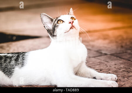 Amazing, fantastic and beautiful cat on the house sidewalk looking up