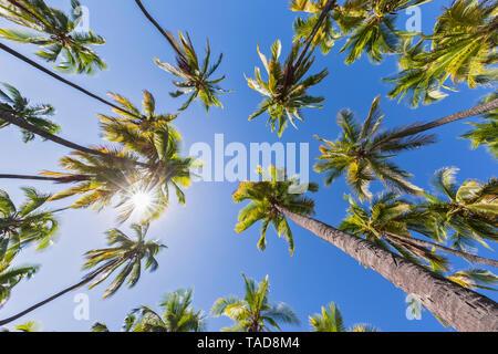 USA, Hawaii, Big Island, Pu'uhonua o Honaunau National Park - Stock Photo