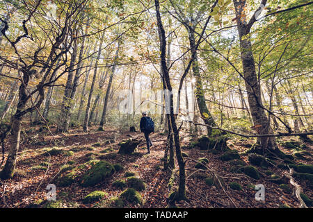 Spain, Navarra, Irati Forest, young woman walking in lush forest