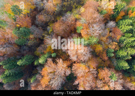 Germany, Bavaria, autumnal mixed forest near Icking, aerial view - Stock Photo
