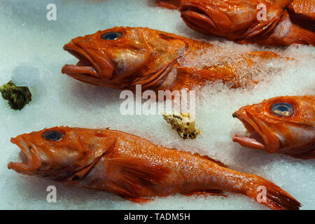 Fresh and wild red snapper fish on ice at fish market, Canada - Stock Photo