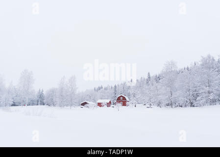 Finland, Kuopio, farmhouse in winter landscape - Stock Photo