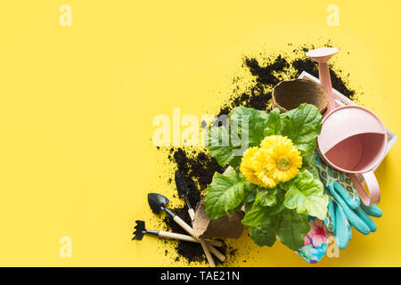 Gardening background with gerbera, tolls and flowers plant in box on yellow background. View from above. Space for text. - Stock Photo