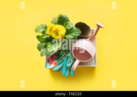 Gardening background with gerbera, tolls and flowers plant in box on yellow background. View from above. - Stock Photo