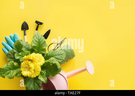 Gardening background with yellow gerbera, tolls and garden flowers plant on yellow background. Top view, place for text. - Stock Photo