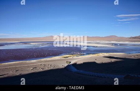 Chilean flamingos on Laguna Colorada, Salar de Uyuni, Bolivia