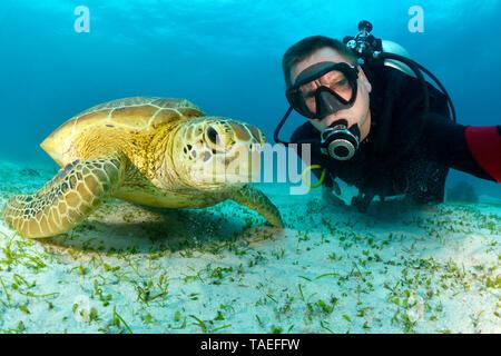 Scuba diver with Green Sea Turtle, Chelonia mydas - Stock Photo