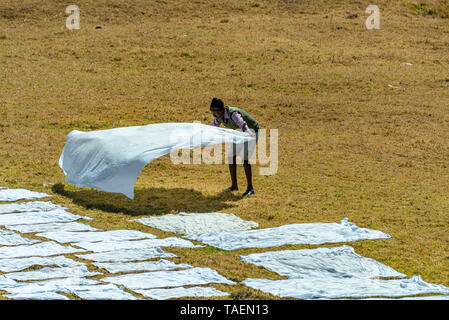 Horizontal view of a dhobi wallah laying out clean washing to dry in India. - Stock Photo