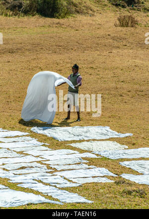 Vertical view of a dhobi wallah laying out clean washing to dry in India. - Stock Photo