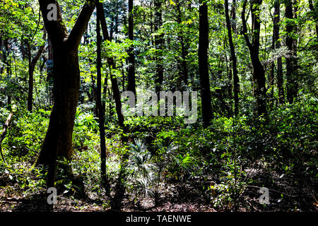 Meiji shrine yoyogi park view of forest trees silhouette in bright sunlight in Tokyo with green foliage during spring or summer and nobody - Stock Photo