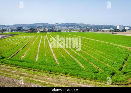 Toyama, Japan countryside with view of farmland in rural area in Gifu prefecture, Hida with green field near Hayahoshi during day - Stock Photo