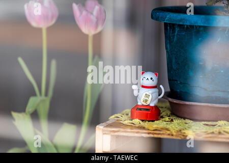 Nikko, Japan - April 4, 2019: Store display in Tochigi prefecture view from window with lucky cat and tulip flowers - Stock Photo