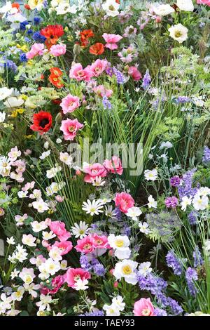 Chelsea in Bloom 2019, The Ivy, Chelsea Garden, wildflowers - Stock Photo