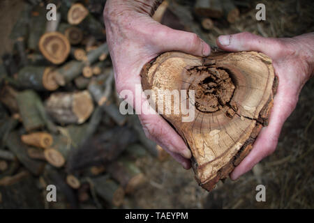 Closeup of male hands holding a heart-shaped wood cut for heating a house, background or concept. - Stock Photo