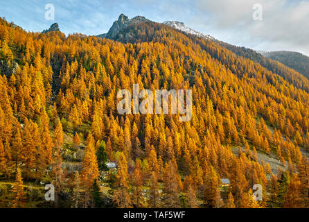 Fall larche forest in the Gordolasque valley, Mercantour National Park, Alps, France - Stock Photo