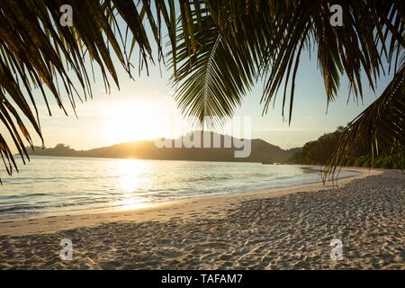 Close-up Of Palm Leaves At Baie Lazare Beach At Sunset, Mahe Island, Seychelles - Stock Photo