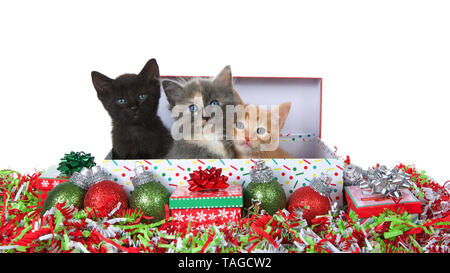 Three adorable kittens sitting in a Christmas present box surrounded by ornaments, presents and confetti with a vibrant green background, looking arou - Stock Photo