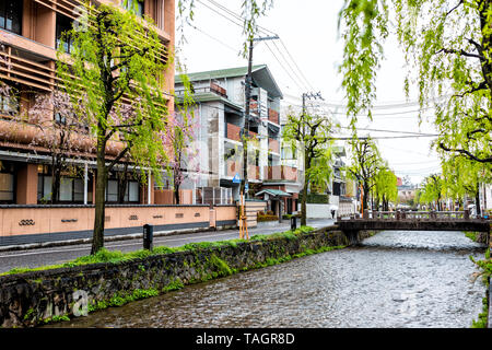 Kyoto, Japan - April 10, 2019: Gion district with cherry blossom sakura and willow trees in spring with blooming flowers in garden park and Shirakawa  - Stock Photo