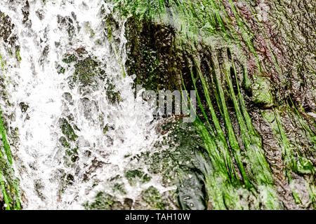 Abstract closeup of rock cliff with waterfall water falling by green color moss in Okuhida villages near Takayama, Japan mountain in Gifu Prefecture p - Stock Photo