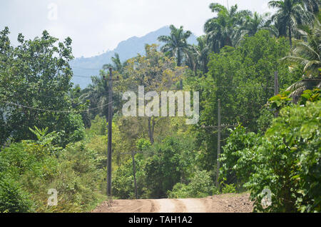 Fields and forested slopes in Guisa municipality (Granma province, Cuba), in the vicinity of Pico de la Bayamesa national park, southern Cuba