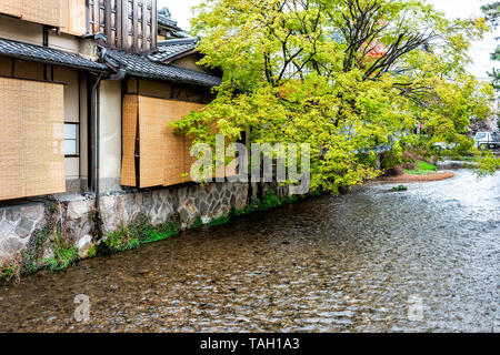 Kyoto, Japan Gion with cherry blossom sakura and willow trees in spring with blooming flowers in garden park and Shirakawa river and bridge - Stock Photo