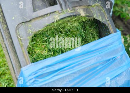 Close up of fresh mowed grass in a lawn mower. - Stock Photo