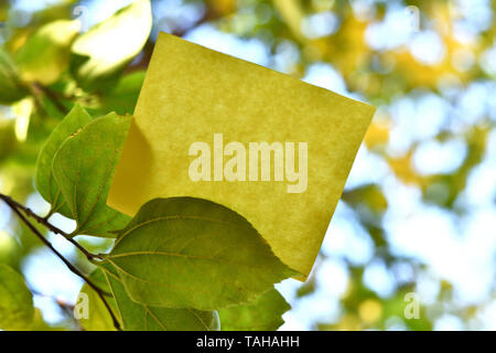 Piece of square paper use to give notation on tree leaf under sunny day - Stock Photo
