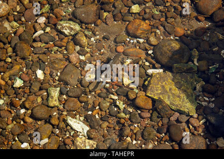 Close-up of pebbles in a clear river with a small fish swimming - Stock Photo