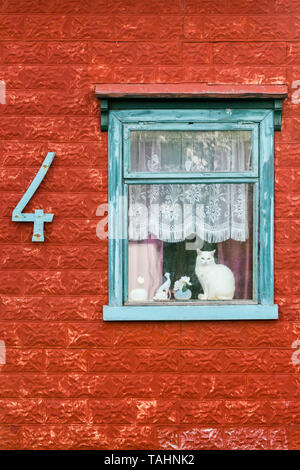 A white cat sitting in the window of an old house in Akureyri, Iceland. The walls are covered with red painted pressed metal tiles, known as stone-tin - Stock Photo