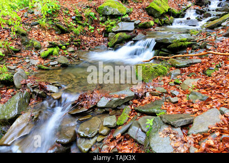 A fast mountain stream flows between stone boulders in a wild, spring wet and mysterious Carpathian forest - Stock Photo