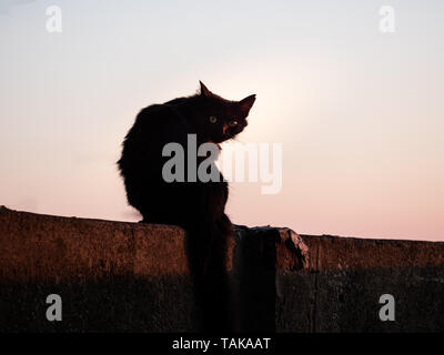 Image of black silhouette of a cat sitting on a wall during sunset - Stock Photo