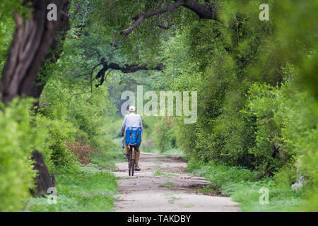 Man riding a bicycle on a  road. Keoladeo National Park. Bharatpur. Rajasthan. India. - Stock Photo