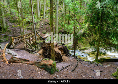 A fallen tree and an old wooden bridge over the Cypress Creek running through a rough terrain in a dark rainforest with Douglas fir and western red ce - Stock Photo