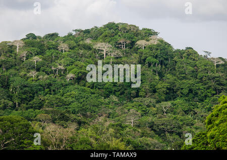 The lush forest of the Soberania National Park along the Chagres River - Stock Photo