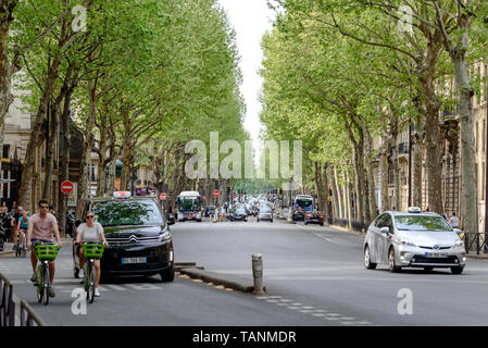 Two bicyclists on the tree-lined Boulevard Saint-Germain in the 6th arrondissement in Paris - Stock Photo