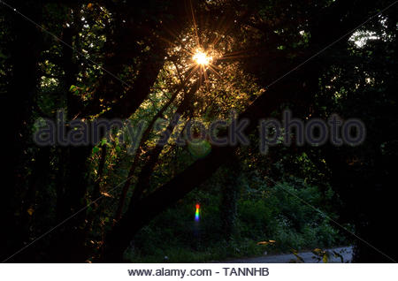 The warm evening sun's rays shining through trees form a star and some colourful lens flare. At the foot of Horsenden Hill in Perivale - Stock Photo