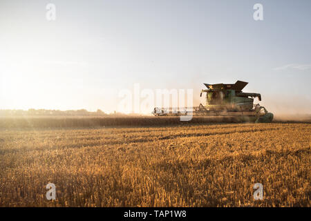 Harvested wheat field with a working combine harvester at sunset - Stock Photo