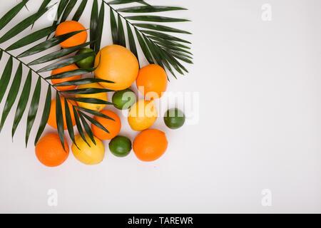 Citrus fruits - orange, lemon, grapefruit, limeand palm leaves - Stock Photo