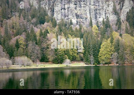 Feldsee. Feldberg lake. Early spring. Mountains, rocks and calm lake in woods. Black Forest. Schwarzwald, Germany. - Stock Photo