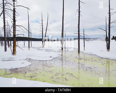 Snowy landscape near Silex Spring in the Lower Geyser Basin of Yellowstone National Park with standing, dead pine trees. - Stock Photo