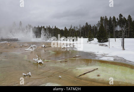 Colorful algae in the run off of Silex Spring in the Lower Geyser Basin in Yellowstone National Park in winter. - Stock Photo