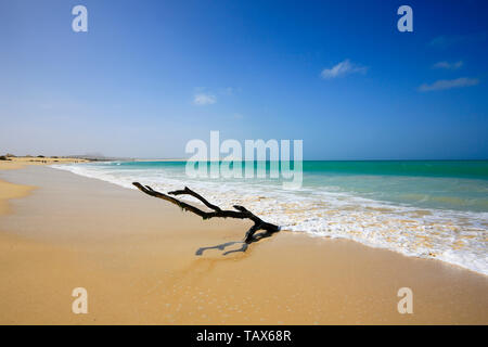 20.02.2019, Sal Rei, Boa Vista, Cape Verde Islands - Praia de Chaves, dead wood on the sandy beach. 00X190220D001CAROEX.JPG [MODEL RELEASE: NOT APPLIC - Stock Photo