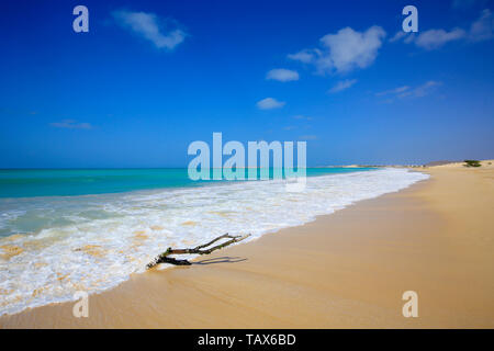 20.02.2019, Sal Rei, Boa Vista, Cape Verde Islands - Praia de Chaves, dead wood on the sandy beach. 00X190220D004CAROEX.JPG [MODEL RELEASE: NOT APPLIC - Stock Photo